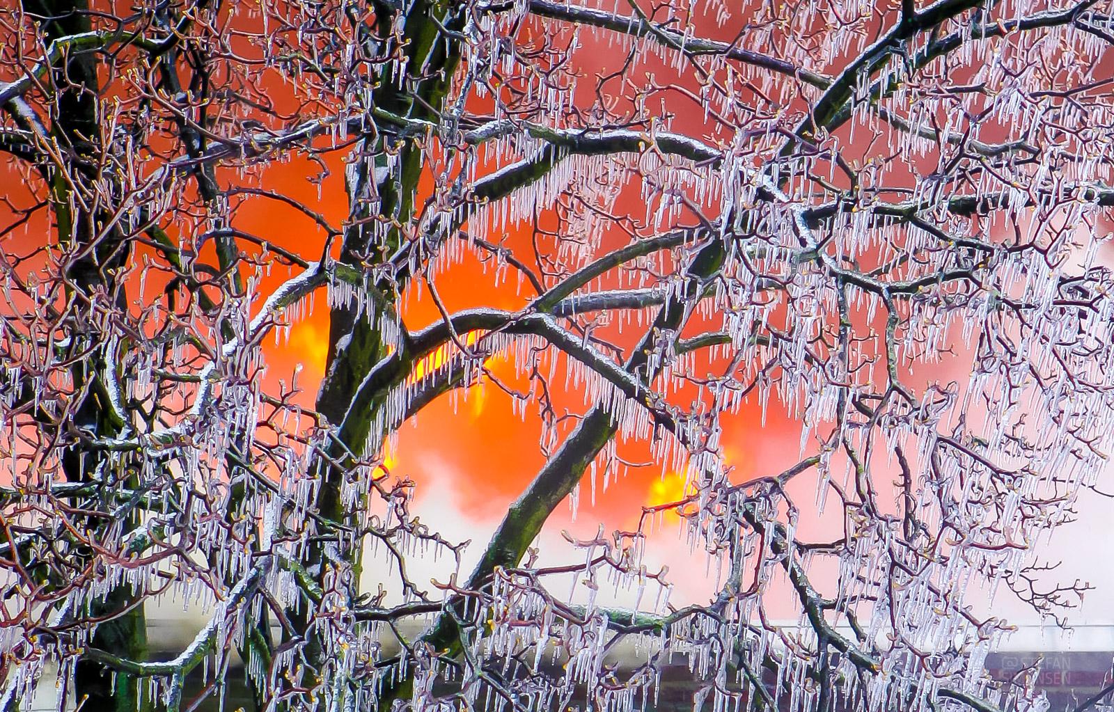 Flammen lodern hinter einem, durch Löschwasser vereisten, Baum (Foto: n112.de/Stefan Hillen)